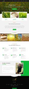 indo grain food-techindustan